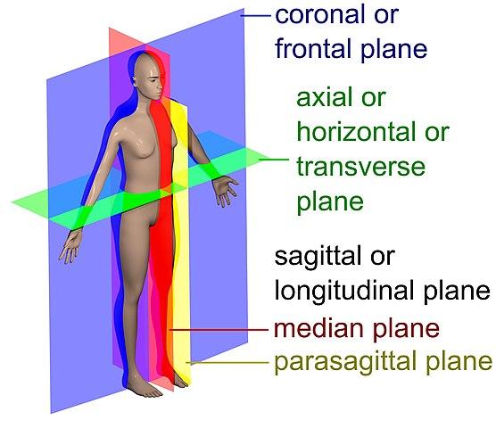 Sagittal Plane